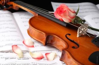 rosa-violin